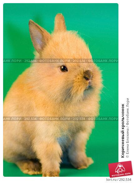 Коричневый крольчонок, фото № 292534, снято 20 мая 2008 г. (c) Елена Блохина / Фотобанк Лори