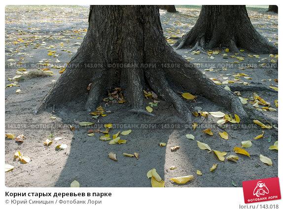 Корни старых деревьев в парке, фото № 143018, снято 7 сентября 2007 г. (c) Юрий Синицын / Фотобанк Лори