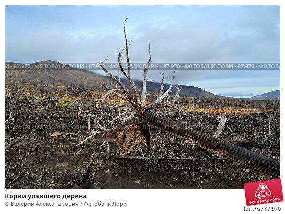 Корни упавшего дерева, фото № 87970, снято 22 августа 2017 г. (c) Валерий Александрович / Фотобанк Лори