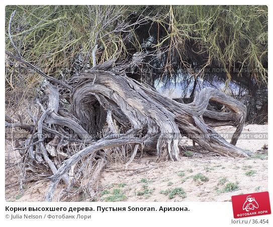 Корни высохшего дерева. Пустыня Sonoran. Аризона., фото № 36454, снято 22 октября 2016 г. (c) Julia Nelson / Фотобанк Лори