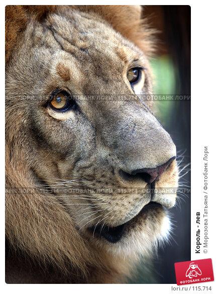 Король - лев, фото № 115714, снято 23 октября 2007 г. (c) Морозова Татьяна / Фотобанк Лори