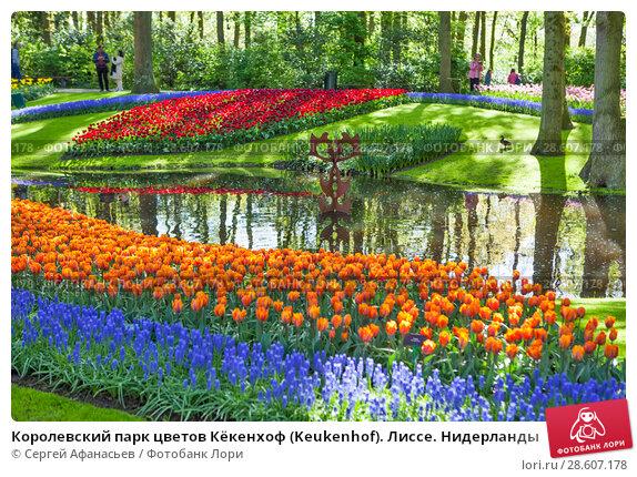 Купить «Королевский парк цветов Кёкенхоф (Keukenhof). Лиссе. Нидерланды», фото № 28607178, снято 4 мая 2018 г. (c) Сергей Афанасьев / Фотобанк Лори