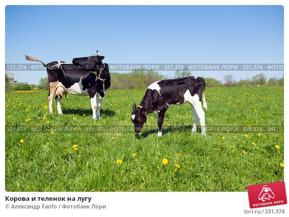 Купить «Корова и теленок на лугу», фото № 331374, снято 21 апреля 2018 г. (c) Александр Fanfo / Фотобанк Лори