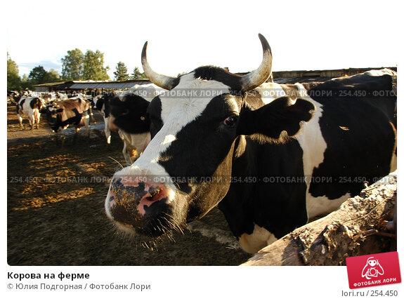 Корова на ферме, фото № 254450, снято 18 августа 2005 г. (c) Юлия Селезнева / Фотобанк Лори