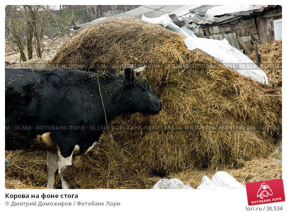 Корова на фоне стога, фото № 38534, снято 2 марта 2007 г. (c) Дмитрий Доможиров / Фотобанк Лори