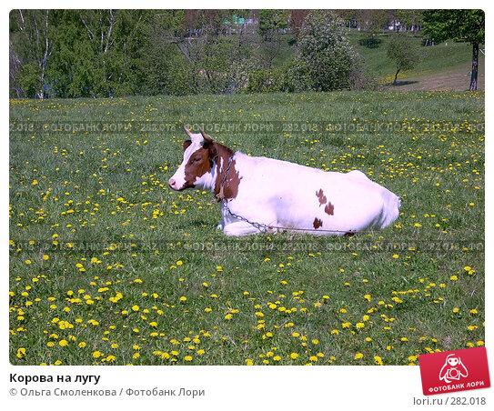 Корова на лугу, фото № 282018, снято 12 мая 2008 г. (c) Ольга Смоленкова / Фотобанк Лори