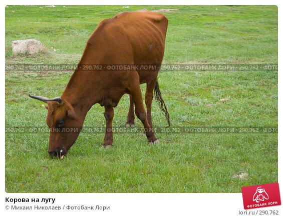 Корова на лугу, фото № 290762, снято 19 мая 2008 г. (c) Михаил Николаев / Фотобанк Лори