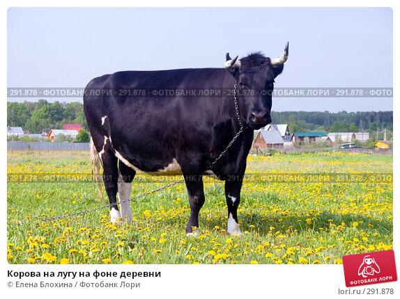 Купить «Корова на лугу на фоне деревни», фото № 291878, снято 19 мая 2008 г. (c) Елена Блохина / Фотобанк Лори