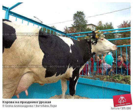 Корова на празднике урожая, фото № 305026, снято 27 августа 2006 г. (c) Елена Александрова / Фотобанк Лори