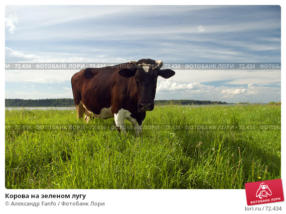 Корова на зеленом лугу, фото № 72434, снято 1 июля 2007 г. (c) Александр Fanfo / Фотобанк Лори