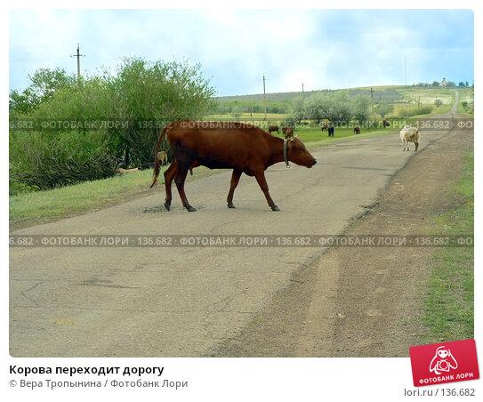 Корова переходит дорогу, фото № 136682, снято 29 мая 2017 г. (c) Вера Тропынина / Фотобанк Лори
