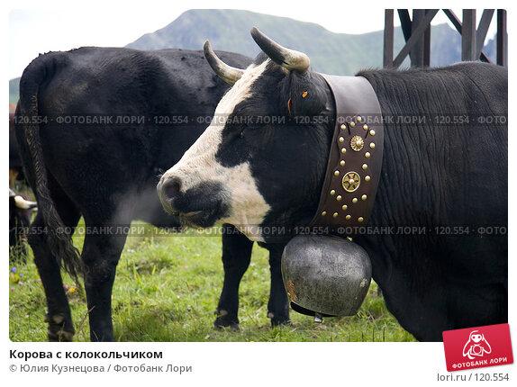 Купить «Корова с колокольчиком», фото № 120554, снято 28 июня 2007 г. (c) Юлия Кузнецова / Фотобанк Лори