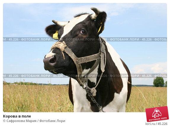 Корова в поле, фото № 45226, снято 7 июля 2005 г. (c) Сафронова Мария / Фотобанк Лори