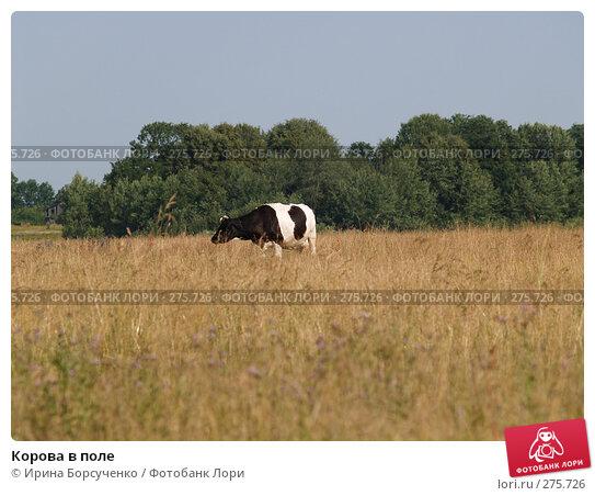 Купить «Корова в поле», фото № 275726, снято 21 июля 2006 г. (c) Ирина Борсученко / Фотобанк Лори
