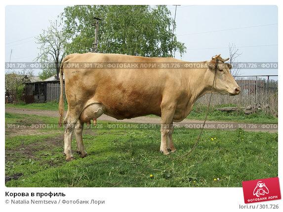 Корова в профиль, эксклюзивное фото № 301726, снято 10 мая 2008 г. (c) Natalia Nemtseva / Фотобанк Лори