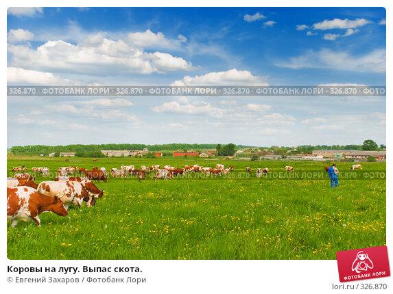 Коровы на лугу. Выпас скота., фото № 326870, снято 28 мая 2008 г. (c) Евгений Захаров / Фотобанк Лори
