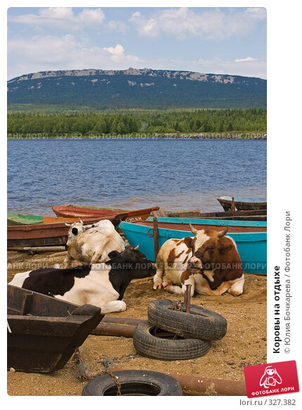 Коровы на отдыхе, фото № 327382, снято 28 июля 2007 г. (c) Юлия Бочкарева / Фотобанк Лори