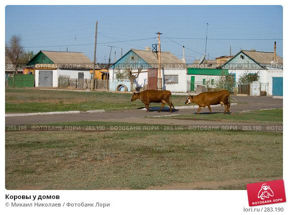 Купить «Коровы у домов», фото № 283190, снято 13 мая 2008 г. (c) Михаил Николаев / Фотобанк Лори