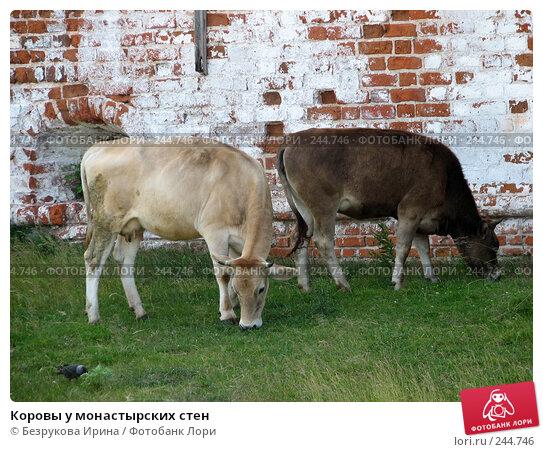 Коровы у монастырских стен, фото № 244746, снято 25 июня 2007 г. (c) Безрукова Ирина / Фотобанк Лори