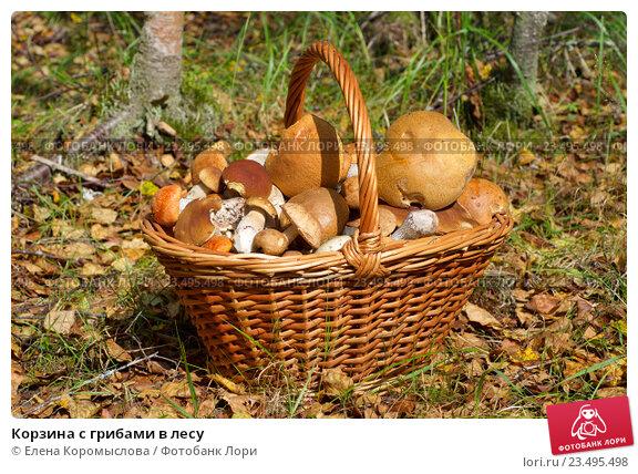 Купить «Корзина с грибами в лесу», фото № 23495498, снято 29 августа 2016 г. (c) Елена Коромыслова / Фотобанк Лори