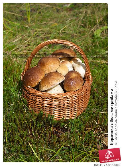 Купить «Корзинка с белыми грибами», эксклюзивное фото № 4015686, снято 30 августа 2012 г. (c) Елена Коромыслова / Фотобанк Лори