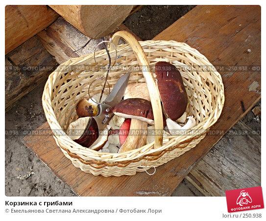 Корзинка с грибами, фото № 250938, снято 28 августа 2006 г. (c) Емельянова Светлана Александровна / Фотобанк Лори