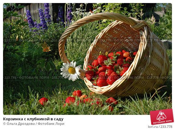 Купить «Корзинка с клубникой в саду», фото № 233778, снято 14 июля 2004 г. (c) Ольга Дроздова / Фотобанк Лори