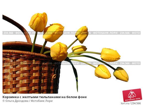 Корзинка с желтыми тюльпанами на белом фоне, фото № 234566, снято 14 мая 2005 г. (c) Ольга Дроздова / Фотобанк Лори