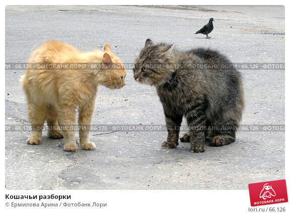 Кошачьи разборки, фото № 66126, снято 9 июня 2006 г. (c) Ермилова Арина / Фотобанк Лори