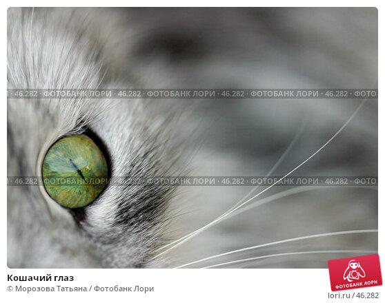 Кошачий глаз, фото № 46282, снято 29 мая 2005 г. (c) Морозова Татьяна / Фотобанк Лори