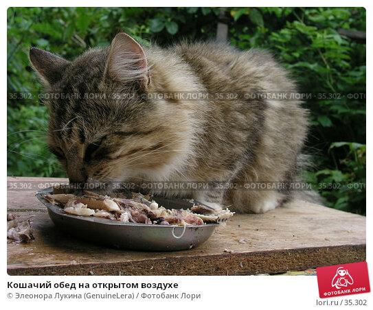 Кошачий обед на открытом воздухе, фото № 35302, снято 26 июля 2017 г. (c) Элеонора Лукина (GenuineLera) / Фотобанк Лори