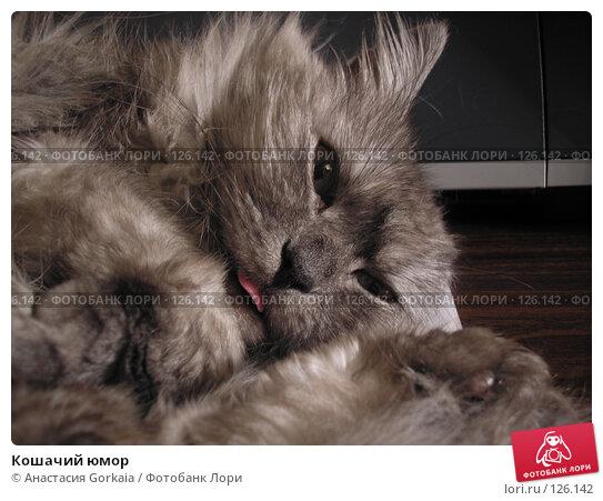 Кошачий юмор, фото № 126142, снято 16 ноября 2007 г. (c) Анастасия Gorkaia / Фотобанк Лори