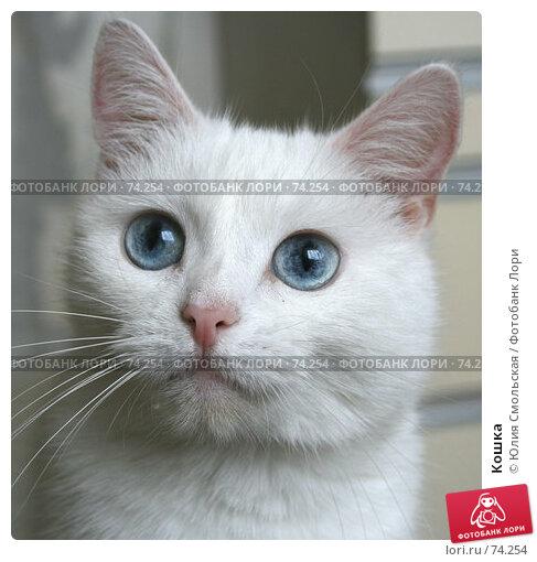 Купить «Кошка», фото № 74254, снято 19 августа 2007 г. (c) Юлия Смольская / Фотобанк Лори