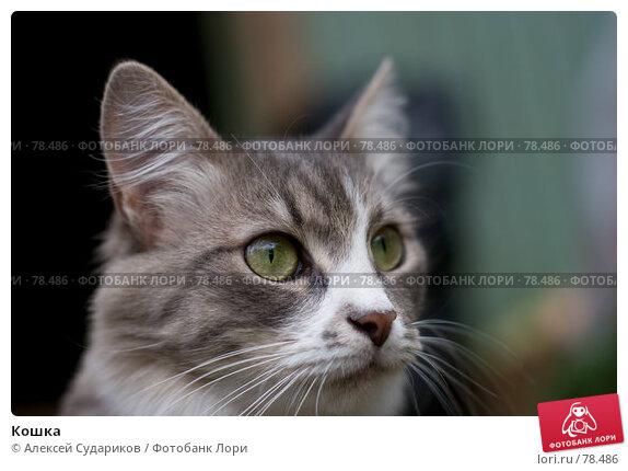 Купить «Кошка», фото № 78486, снято 1 сентября 2007 г. (c) Алексей Судариков / Фотобанк Лори