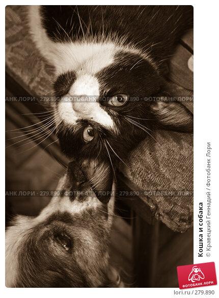 Купить «Кошка и собака», фото № 279890, снято 1 августа 2004 г. (c) Кравецкий Геннадий / Фотобанк Лори