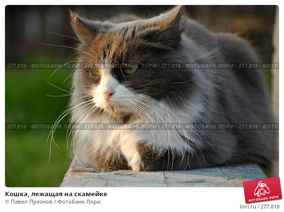Кошка, лежащая на скамейке, фото № 277818, снято 1 мая 2008 г. (c) Павел Преснов / Фотобанк Лори
