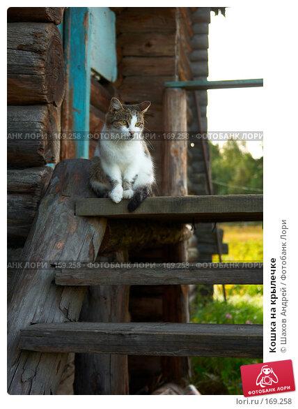 Кошка на крылечке, фото № 169258, снято 28 августа 2007 г. (c) Шахов Андрей / Фотобанк Лори