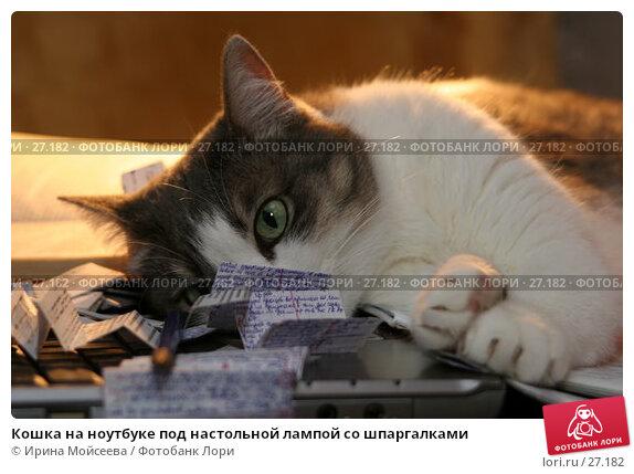 Кошка на ноутбуке под настольной лампой со шпаргалками, эксклюзивное фото № 27182, снято 2 февраля 2006 г. (c) Ирина Мойсеева / Фотобанк Лори