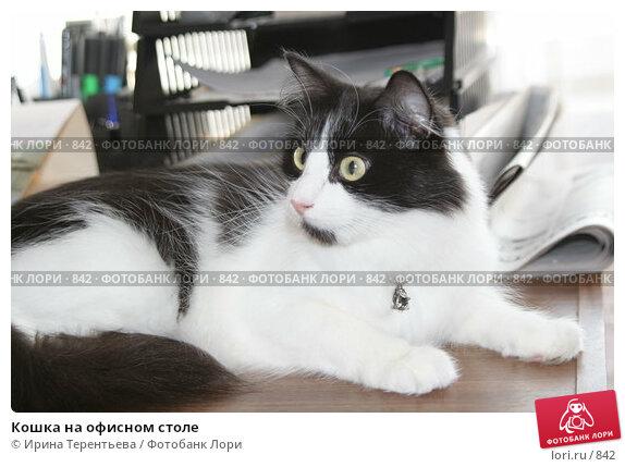 Кошка на офисном столе, эксклюзивное фото № 842, снято 29 июля 2005 г. (c) Ирина Терентьева / Фотобанк Лори