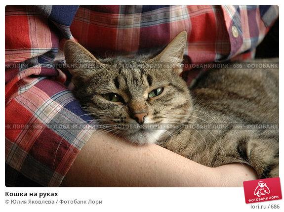 Кошка на руках, фото № 686, снято 15 февраля 2005 г. (c) Юлия Яковлева / Фотобанк Лори