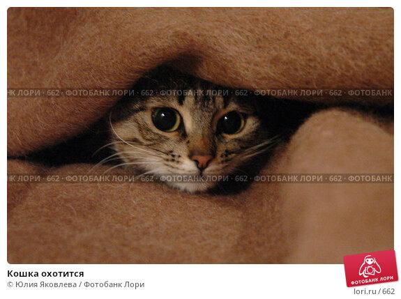 Купить «Кошка охотится», фото № 662, снято 10 января 2005 г. (c) Юлия Яковлева / Фотобанк Лори