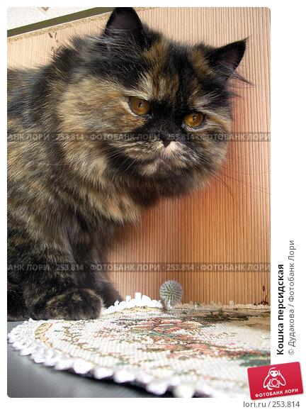 Кошка персидская, фото № 253814, снято 18 марта 2008 г. (c) Дудакова / Фотобанк Лори