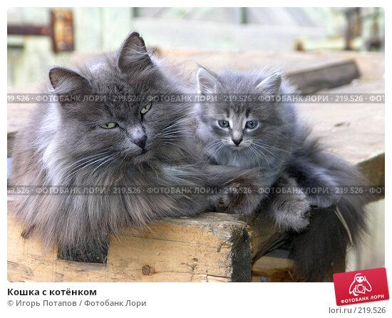 Кошка с котёнком, фото № 219526, снято 16 декабря 2005 г. (c) Игорь Потапов / Фотобанк Лори