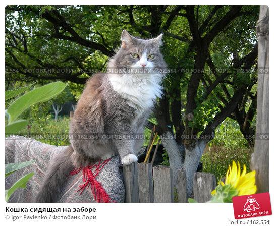 Кошка сидящая на заборе, фото № 162554, снято 2 июля 2006 г. (c) Igor Pavlenko / Фотобанк Лори