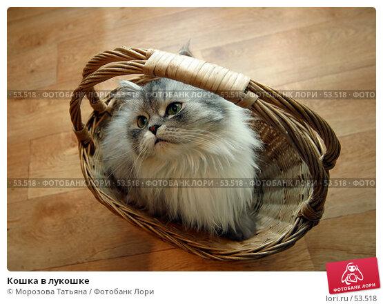 Кошка в лукошке, фото № 53518, снято 28 декабря 2005 г. (c) Морозова Татьяна / Фотобанк Лори