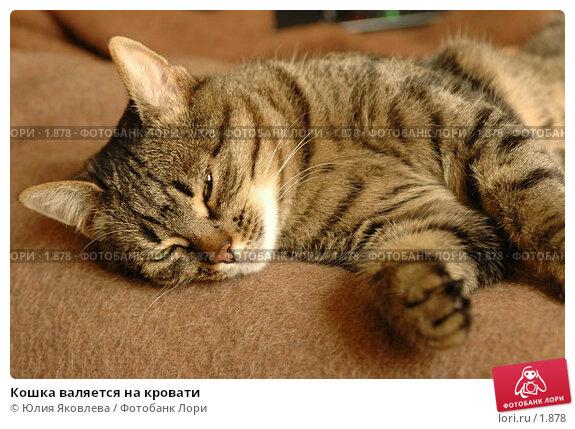 Кошка валяется на кровати, фото № 1878, снято 21 марта 2006 г. (c) Юлия Яковлева / Фотобанк Лори
