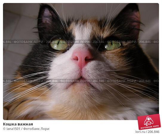 Кошка важная, эксклюзивное фото № 206846, снято 3 декабря 2007 г. (c) lana1501 / Фотобанк Лори