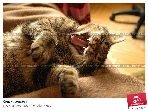 Кошка зевает, фото № 1882, снято 21 марта 2006 г. (c) Юлия Яковлева / Фотобанк Лори