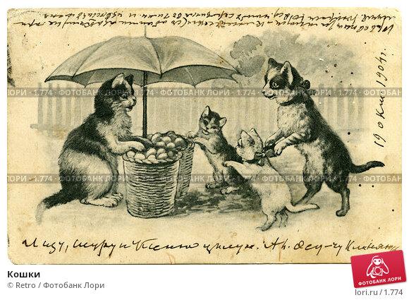 Кошки, фото № 1774, снято 22 июля 2017 г. (c) Retro / Фотобанк Лори