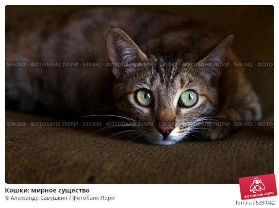 Кошки: мирное существо, фото № 539042, снято 27 июня 2017 г. (c) Александр Савушкин / Фотобанк Лори
